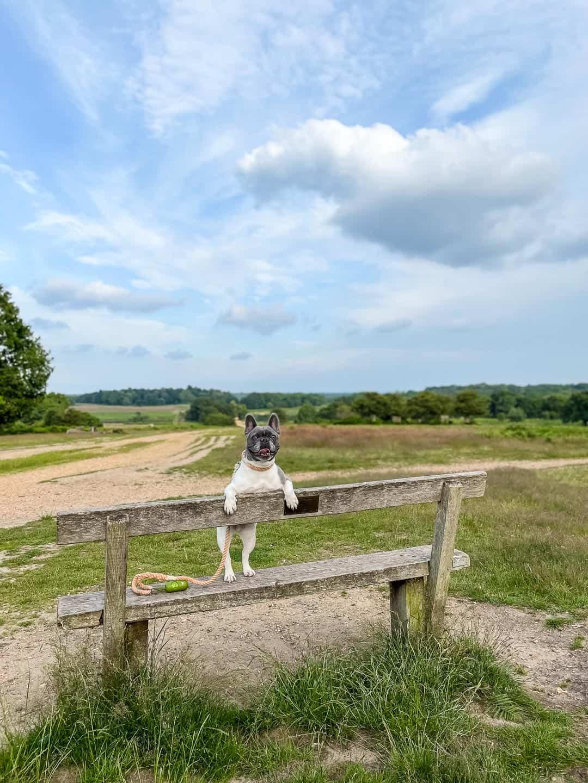 Dog walks in Richmond Park