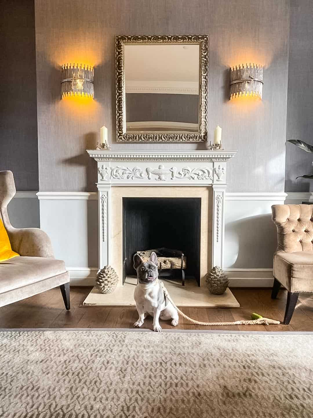 Dogs are very welcome at the Richmond Hill Hotel