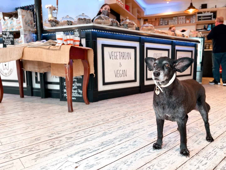 Guide To The Best Dog-friendly Vegan Restaurants in London