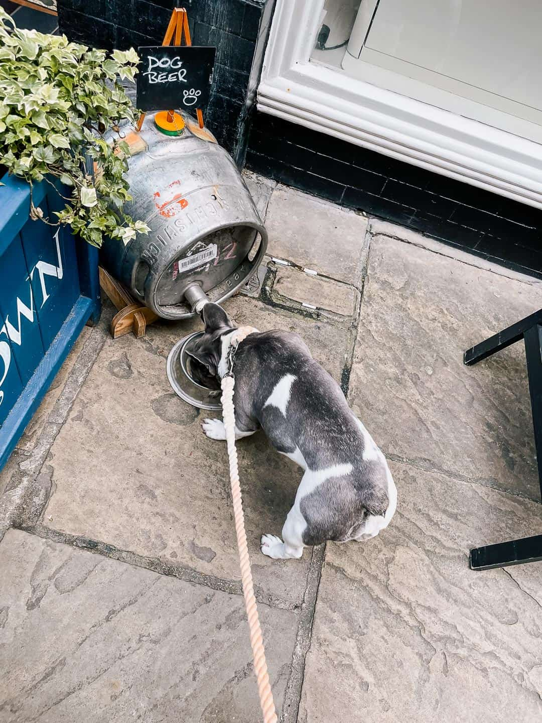 Refueling at Doggy Beer Station at The Angel and Crown Richmond
