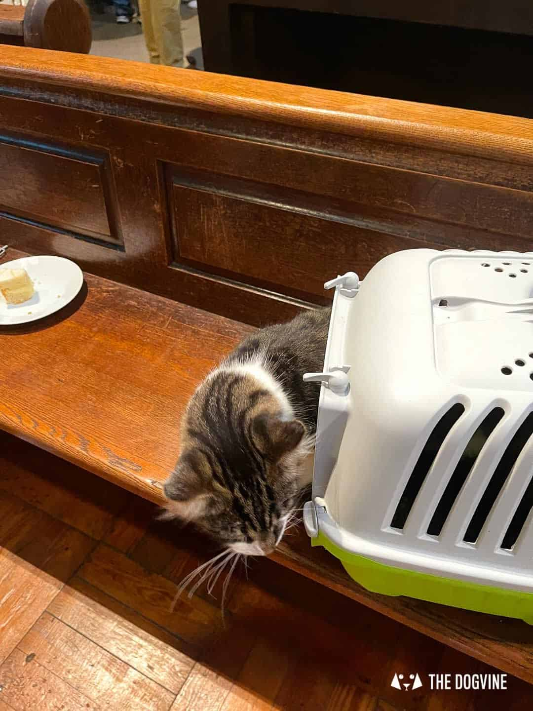 Cats came along too to the pet blessing in London