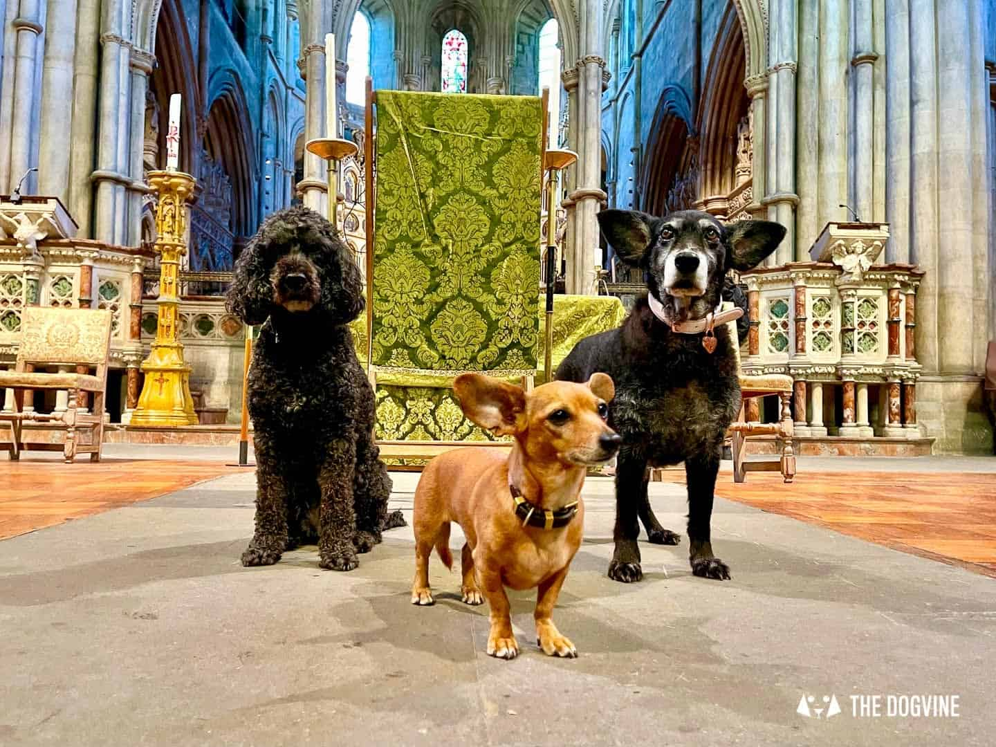 Did You Know There's A Beautiful Dog-friendly Church In London?