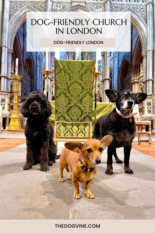 Dog-friendly Church in London St John the Baptist Holland Road Kensington
