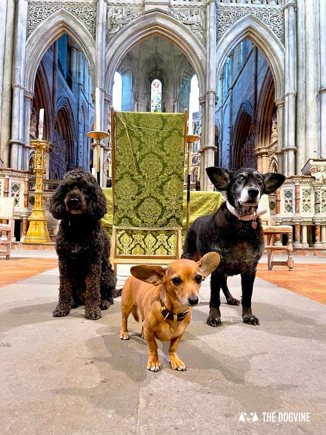 Dogs are welcome at St John the Baptist Church in London