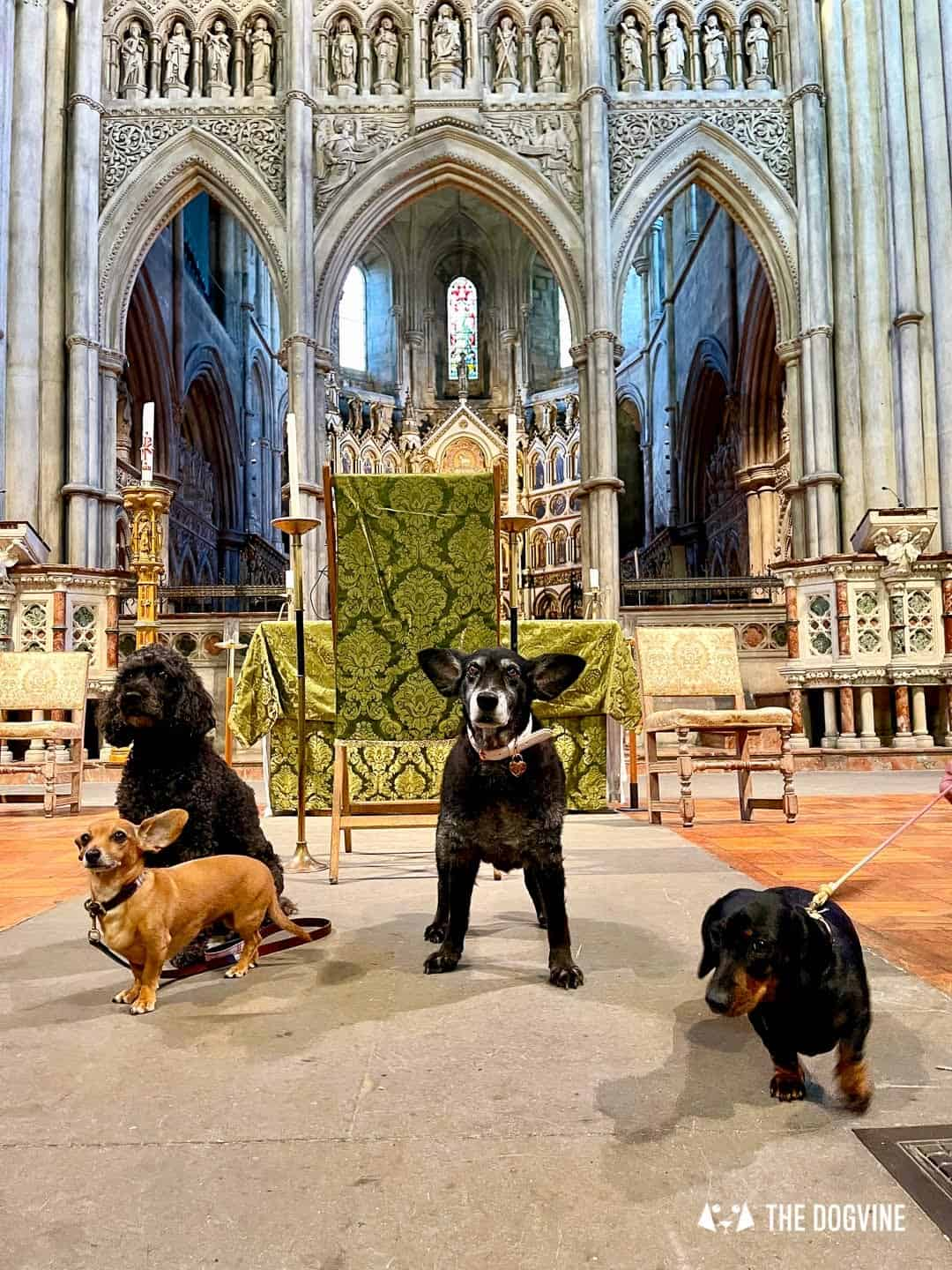 Dogs of London at the Animal Blessing Service at St John the Baptist Kensington